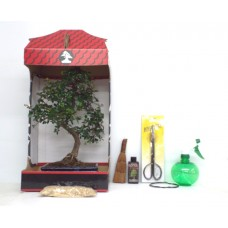 8 PIECE CHINESE ELM GIFT SET