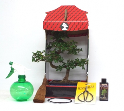 CHINESE ELM 8 PIECE GIFT SET